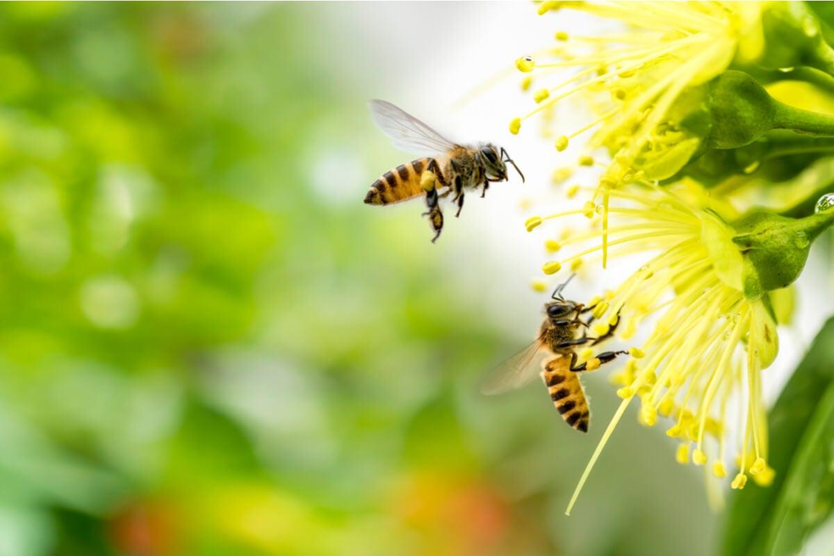 attirer les abeilles au jardin